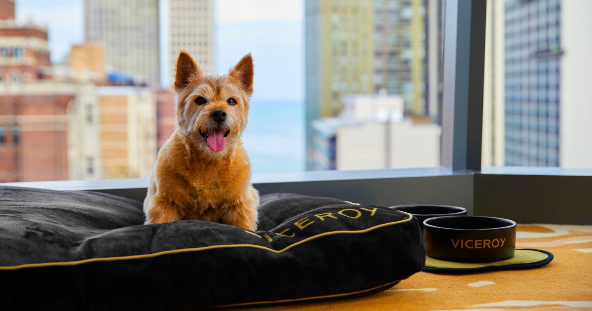Small dog sitting on custom dog bed at the Viceroy Hotel in Chicago